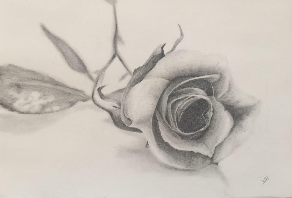 Gevallen roos gemaakt met potlood